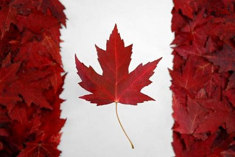 canadian flag leaves