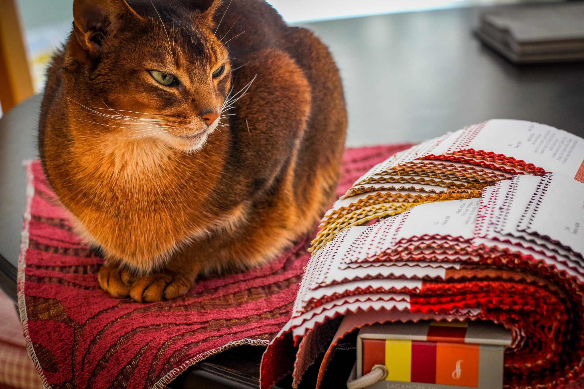 Cat resting on fabric samples assists with interior design selections.