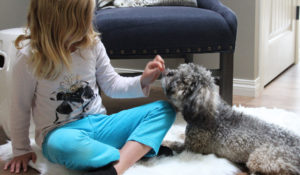 Child plays with grey poodle on a sheepskin on the floor.