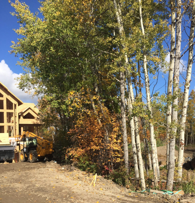 beautiful lot with lovely trees is a perfect setting for this new build lake home